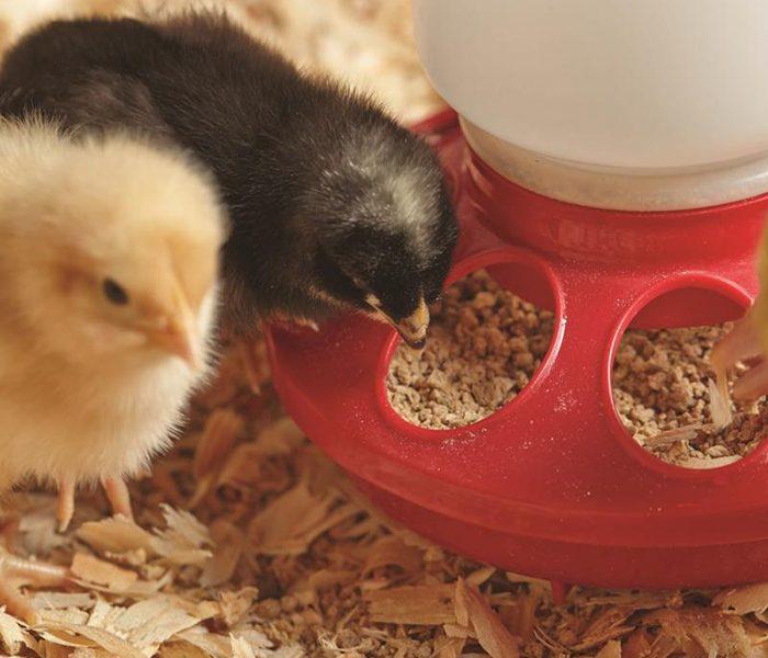Animal feed and veterinary
